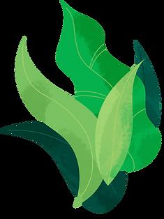 Plant_bush.png