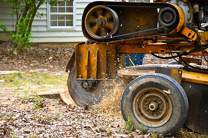 A Stump Grinding  Machine Removing a Stu