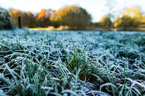 winter grass.jpg