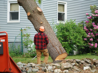 manual worker removing tree in residenti
