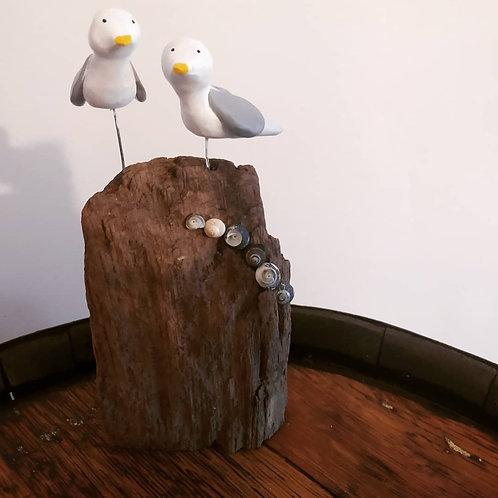 Cliff Top Gulls