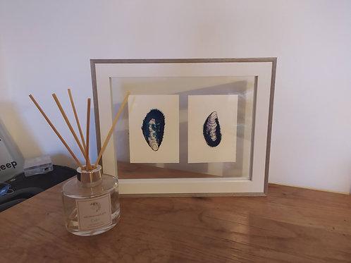 Original Mussel Shells