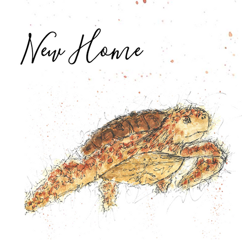 Turtle - New Home