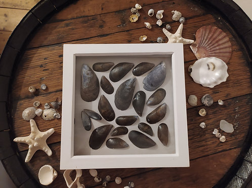 Mussel Shell Box Frame