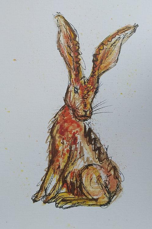 Harriet - The Hare
