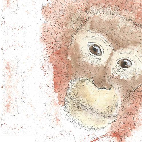 Orangutan plain card
