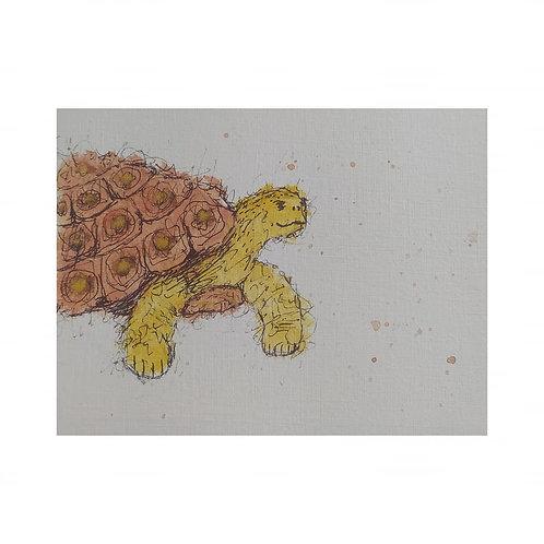 Tessa - The tortoise