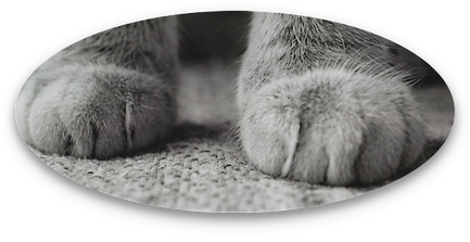photo of gray cat's front paws