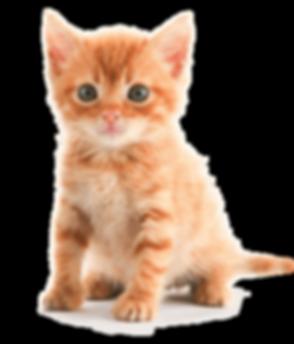 kitten-orange-tabby.png