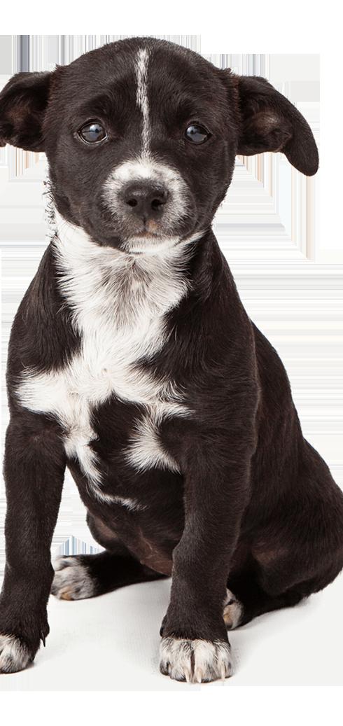 adorable-black-puppy-v2.png