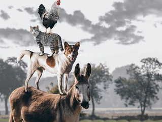 Vitalpilze für Tiere