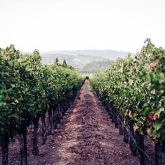 Napa Valley and Sonoma County
