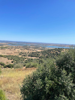 Monsaraz View
