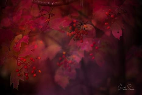 ls_Herbst4.jpg