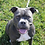 Thumbnail: Sable (F) ADOPTION PENDING