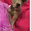 Thumbnail: Puppy 5- ADOPTED