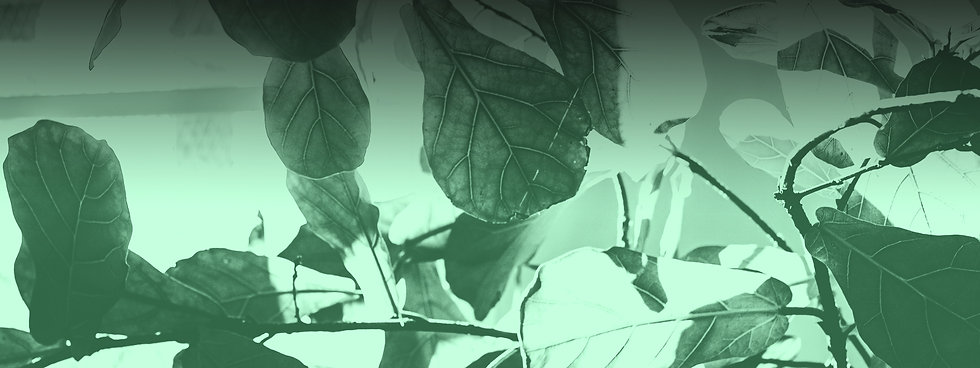 headerplants.jpg