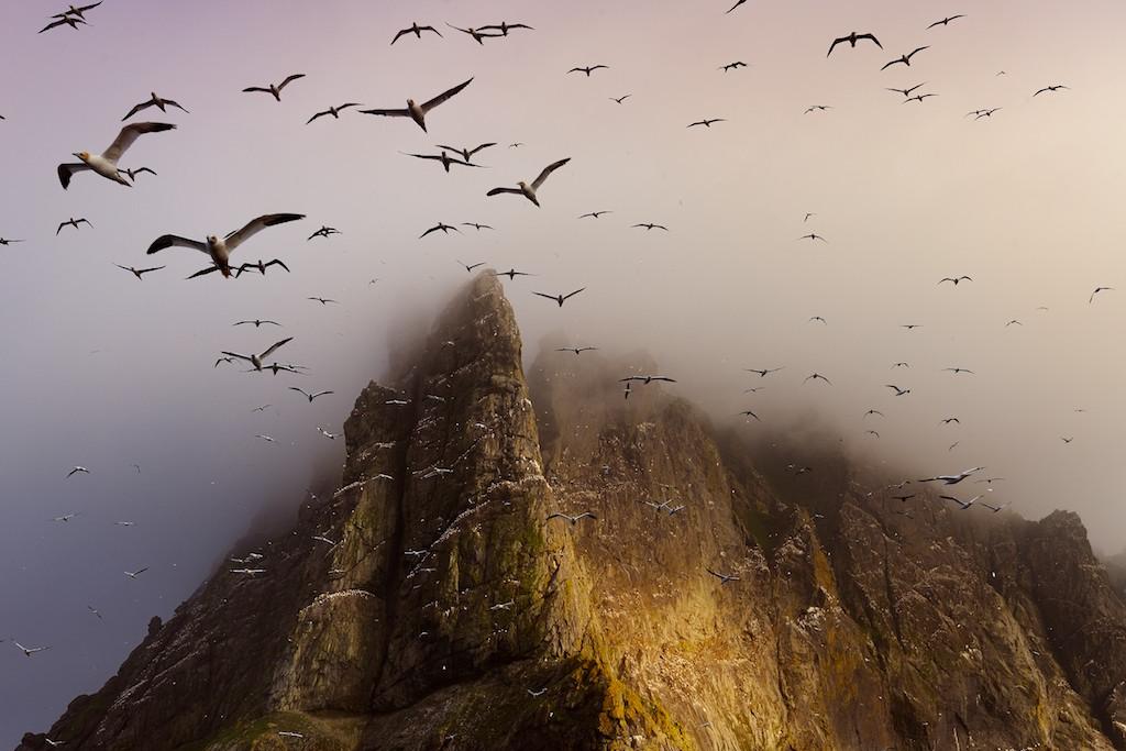 Gannets surrounding Boreray