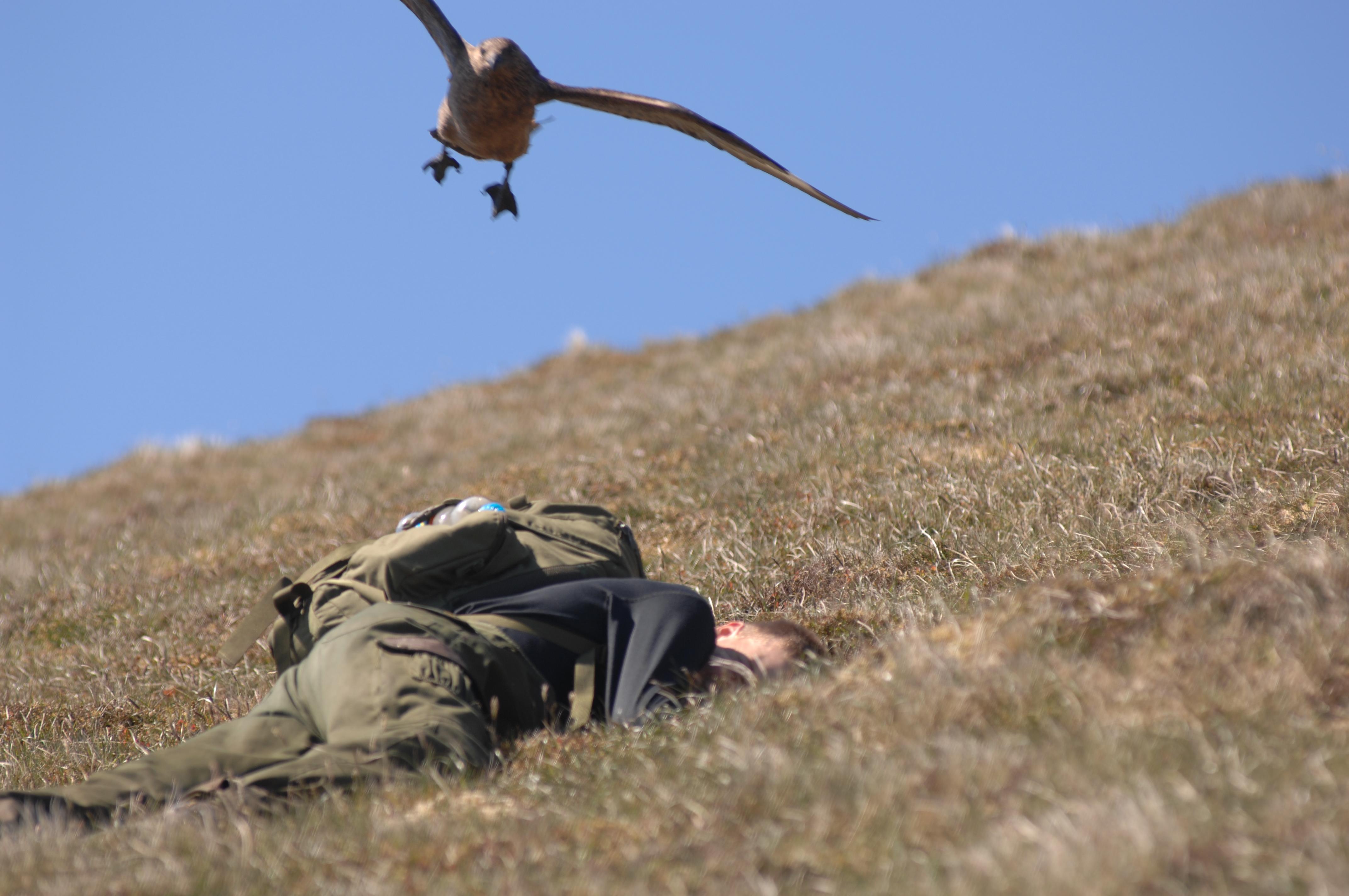 Beware of the low flying Skuas