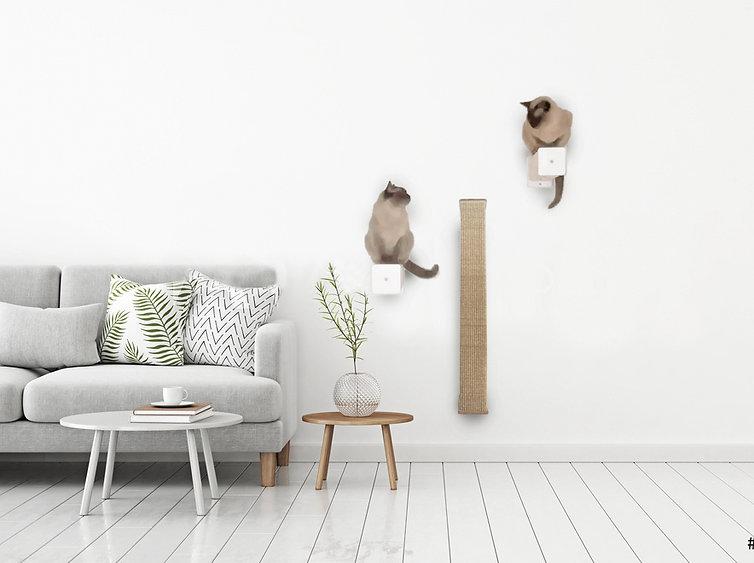 Klettern für Katzen