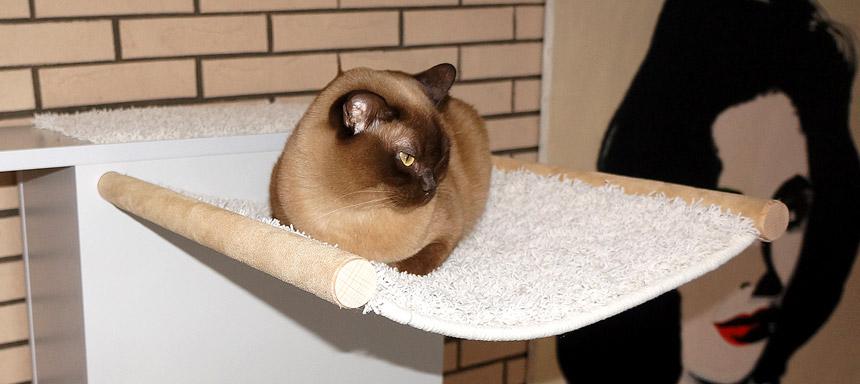 Katze in Hängemulde 2