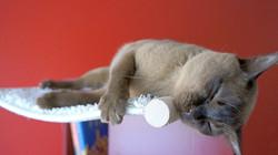 Katze in Hängemulde 5