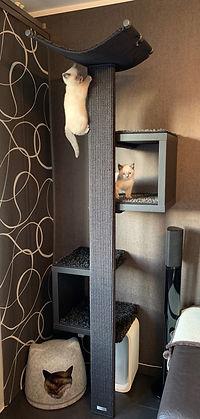 Katze-klettert.jpg