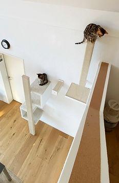 Katzen_beim_klettern.jpg
