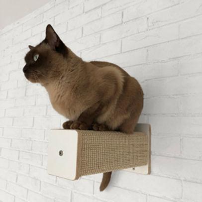 Katze auf Kletterpfosten