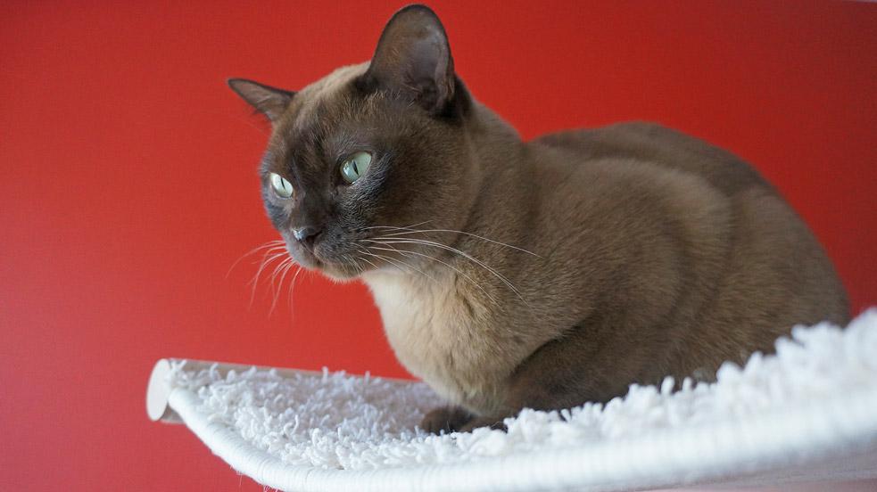 Katze in Hängemulde 4