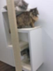 Angorea Katzen im schönen Designer Kratzmöbel