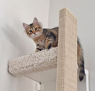 Katze-auf-Kratzbaum-3_web.jpg