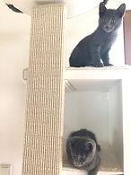 Katzen am Kratzstamm.jpg