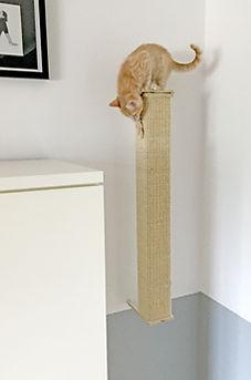 Katze_klettert2.jpg