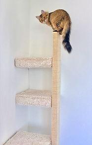 Katze schaut runter von Kratzbaum