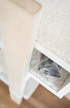 Katze schaut