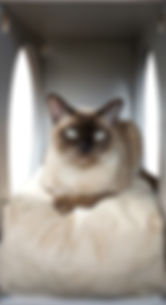 Katze auf Kissen