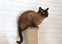 Katze auf Kratzpfosten