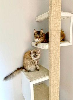 Kratzmöbel-Katzen.jpg