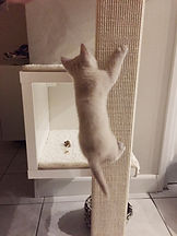 Katze klettert