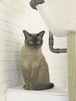 braune Katze auf Liegefläche