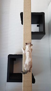 Katze-am-Kratzbaum.jpg