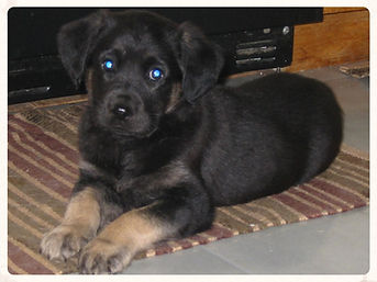 Bruschi Pup