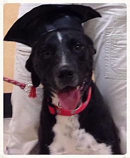 Puppy Graduation