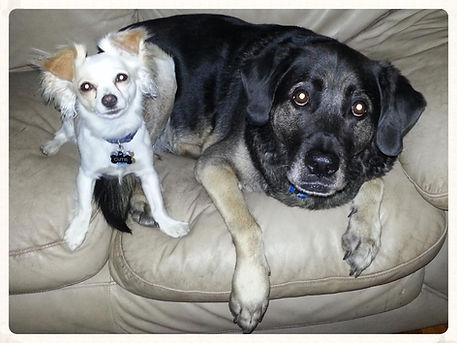 Cutie and Bruschi
