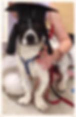 Linus Pup