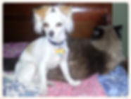 Cutie and Mama Cat