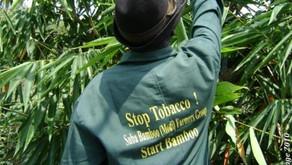 TabacoxBambú