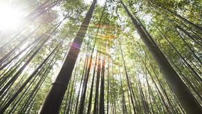 Bambú y cambio climático