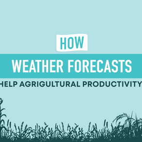 The relationship between weather forecasts and agricultural productivity